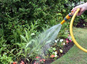 grey-water-garden-watering