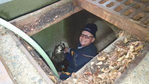 blocked-drainage-investigation